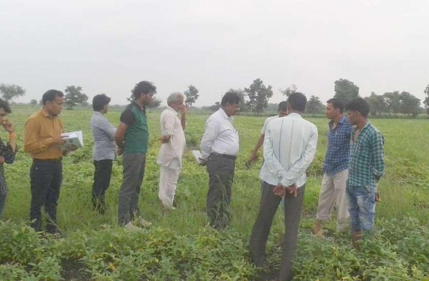 सोयाबीन में बढ़ते रोग ने किसानों के साथ विभाग की बढ़ाई चिंता