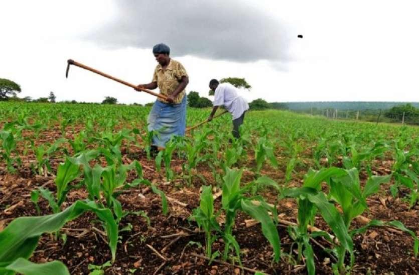 कृषि लोन के नाम पर हो रहा कंपनियों का भला! RBI के आंकड़े से खुली 'किसान कल्याण' की पोल?