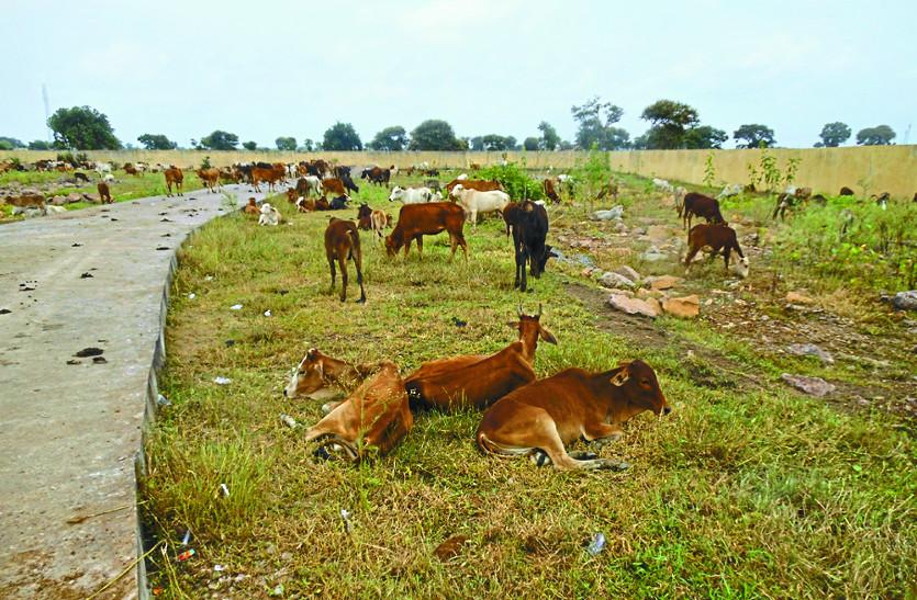 सिटी बस के टर्मिनल को बना दिया मवेशियों का घर, उमस और भूख से मर रहे गाय- बछड़े