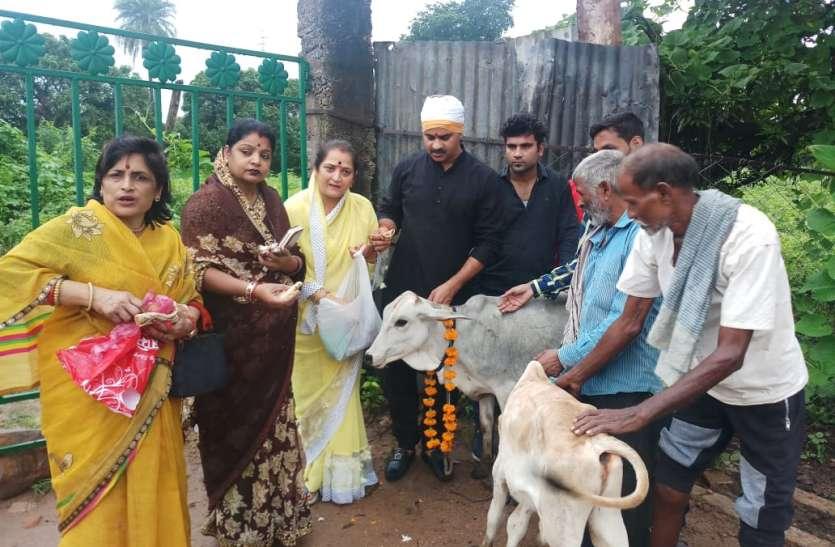 एक तरफ गाय की पूजा, दूसरी ओर खाने को दिया कीटाणुनाशक दवा मिला अनाज