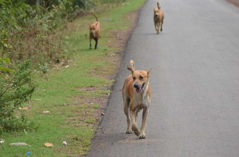 जहां छोड़े थे आवारा कुत्ते वे सभी तो भाग गए, अब मंत्रालय को क्या सबूत दें