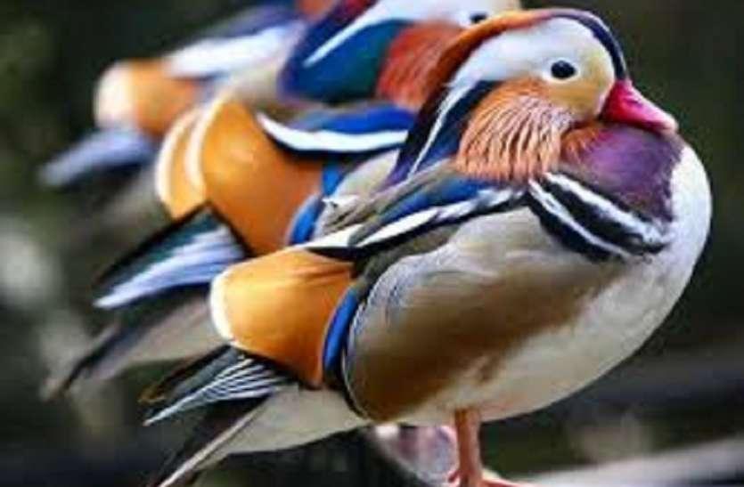 कबूतर चोर के संदेह में हत्या, 4 गिरफ्तार