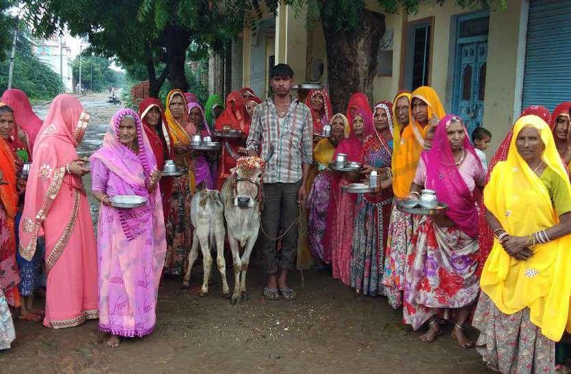 गाय व बछड़े की पूजा कर पुत्र की दीर्घायु की कामना, महिलाओं ने मनाया बछ बारस का पर्व
