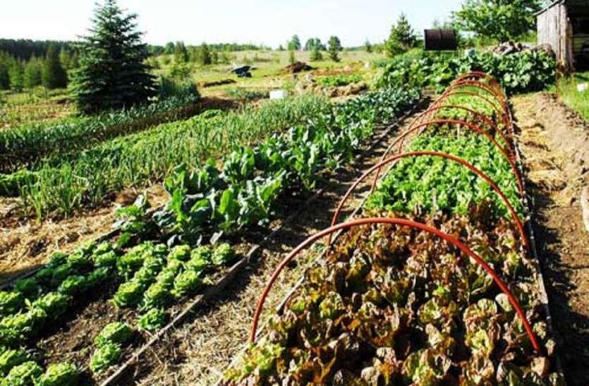 फसलों की बेहतर पैदावर के लिए अब सीएसए करेगा किसानों की मदद