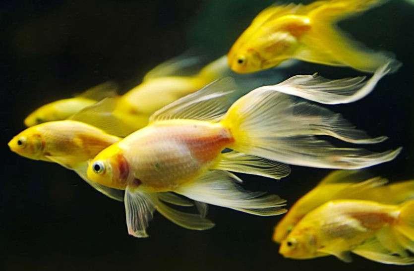 हमारे किए की कीमत  चुका रहीं मछलियां