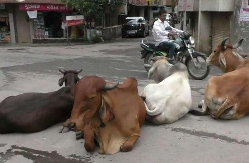 सड़कों पर पशुओं का कब्जे से परेशान लोगों किया कुछ ऐसा...