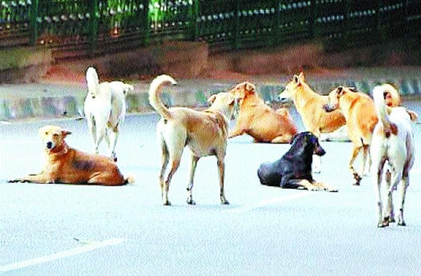 कुत्तों का आतंक,प्रशासन बेपरवाह