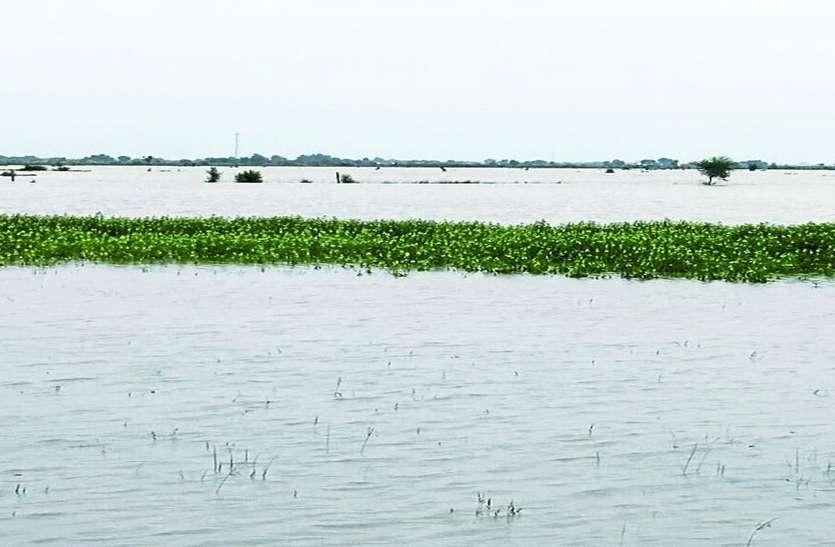 खेतों में भरा पानी, फसलों में हुआ खराबा