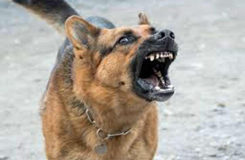 रास्ते में कुत्ते ने ली इतनी खतरनाक एंट्री कि एक-दूसरे से हमेशा के लिए बिछड़ गए मां-बेटे