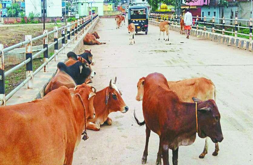 शहर से निकाल कर जंगलों में छोड़ रहे मवेशियों को, नहीं पालना चाह रहे लोग गाय