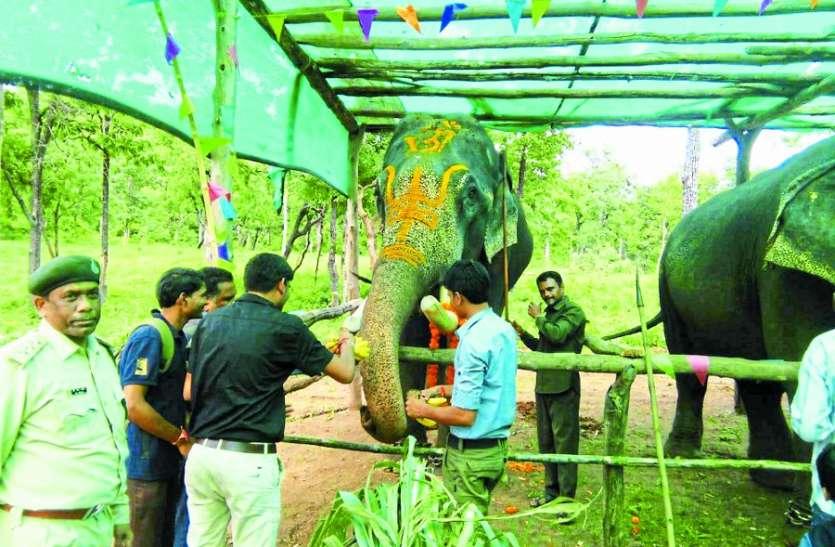 हाथियों की हुई साज सज्जा, सात दिन तक दिया विशेष ट्रीटमेंट