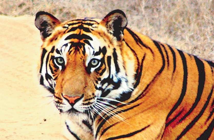 सुप्रीम कोर्ट ने बाघिन टी 1 की दया याचिका की खारिज