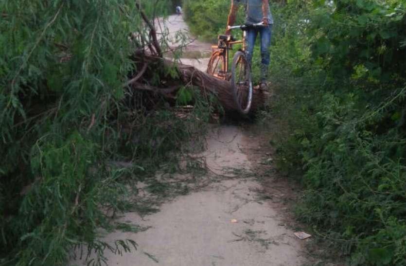 बारिश की वजह से टूटकर कुछ इस तरह सड़क पर गिरा पेड़, मच गई अफरा—तफरी