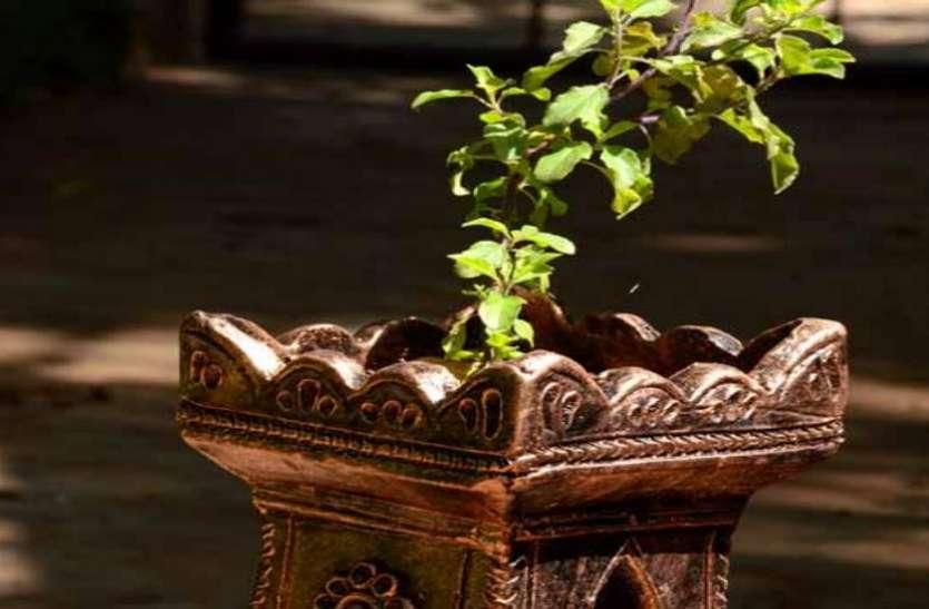 तुलसी का पौधा देने लगे ये संकेत तो समझ जाएं शुरू होने वाला है बुरा वक्त