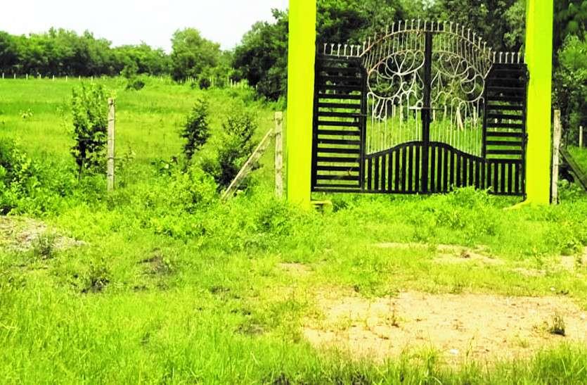 खाली पड़ी जमीन पर लगाने थे फलदार पौधे, योजनाओं पर अफसरों ने फेरा पानी, लगा दिए ये पौधे