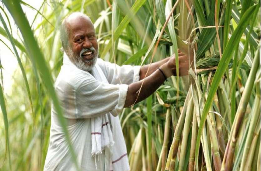 किसानों के लिए वरदान साबित होगा टिश्यू कल्चर से उत्पादित गन्ना, आएगे अच्छे दिन