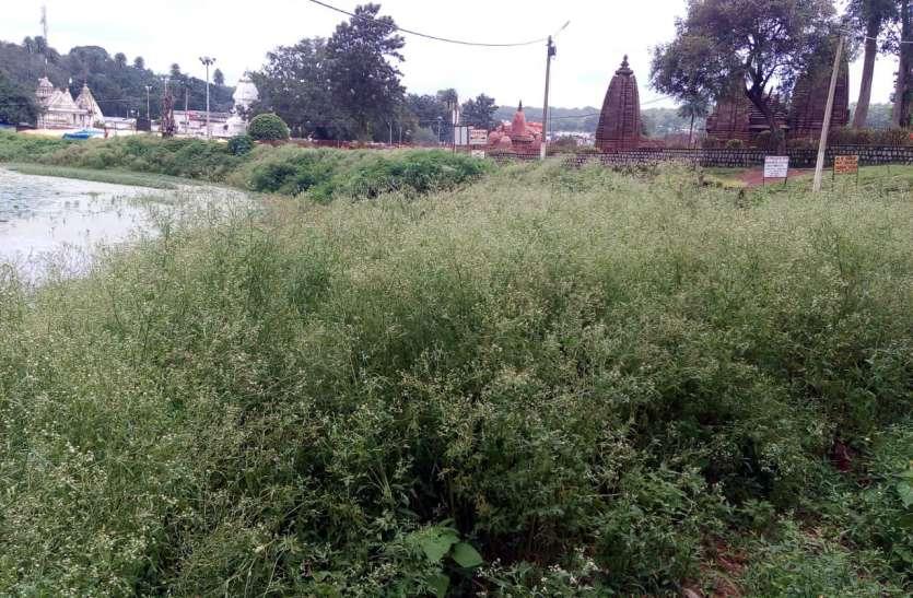 हरियाली की जगह गाजरघास का कब्जा