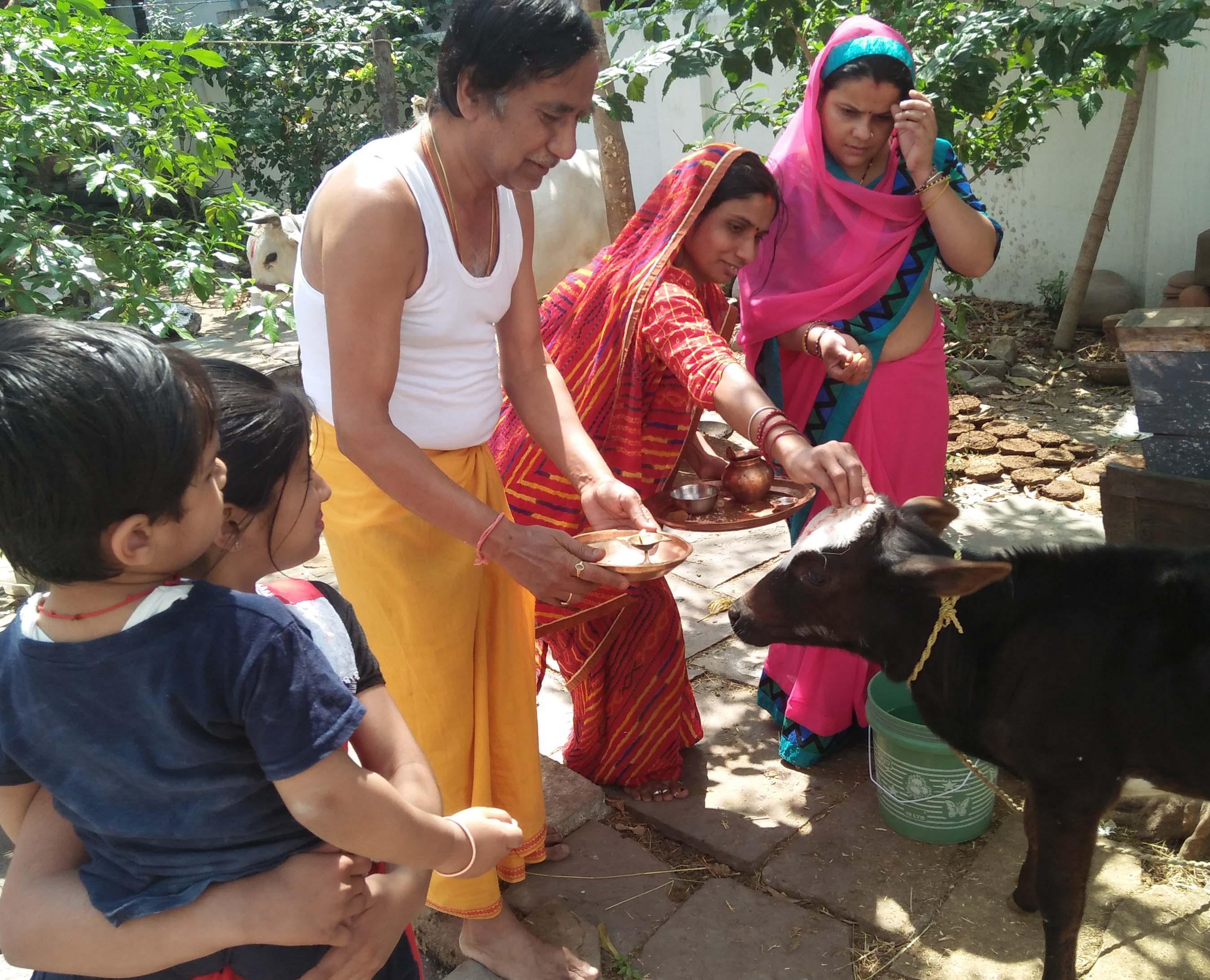 गौ-वत्स द्वादषी पर करें गाय का पूजा, होगा यह फायदा