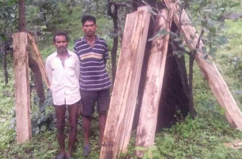 वन विभाग ने पकड़ी सागौन की सिल्लियां