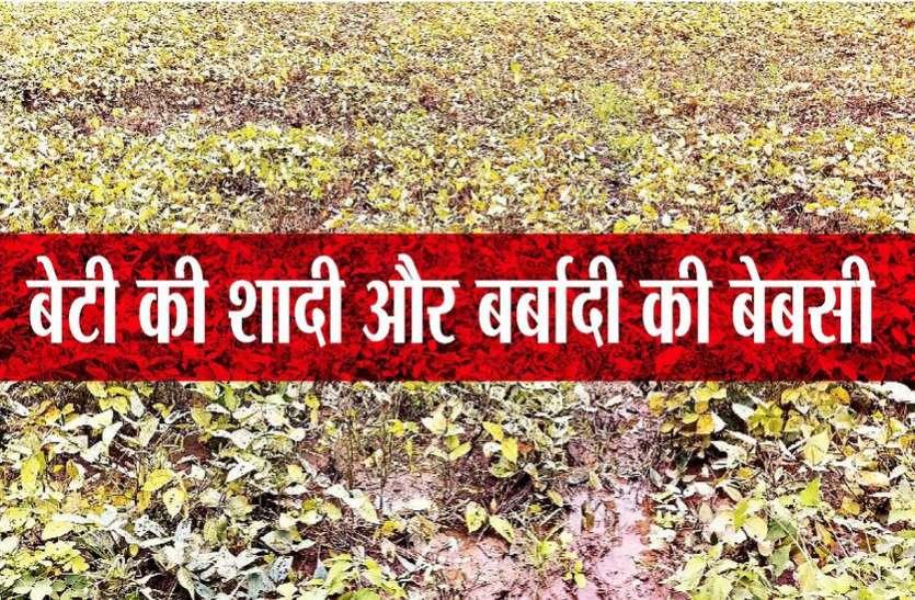 बरसात का कहर: खेतों में हजारों बीघा सोयाबीन और उड़द चौपट