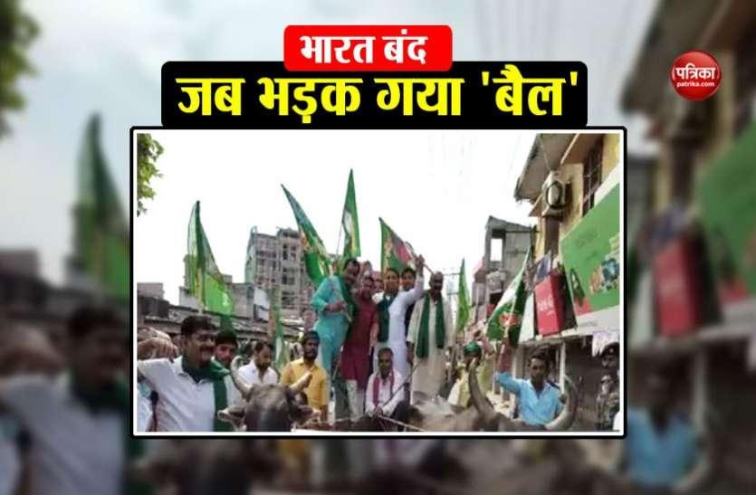 भारत बंद के दौरान बेकाबू भीड़ देख भड़क गया बैल, बाल-बाल बचे विधायक