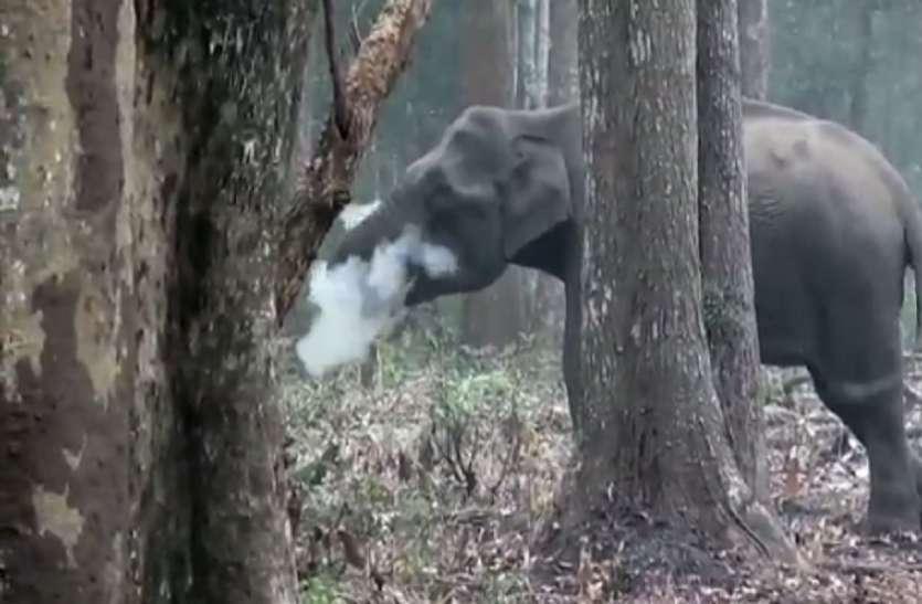 वीडियो बनाता देख जंगली हाथियों को आया गुस्सा, बच्चे को कुचला