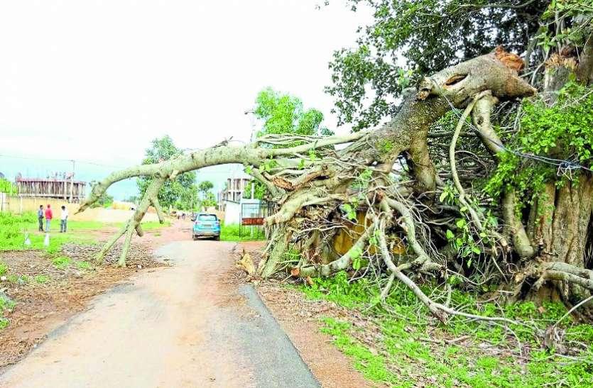 बारिश से सड़क पर गिरा था पेड़, जिससे टूटी विद्युत लाइन तो सुधरी, लेकिन 1 महीने बाद भी पेड़......