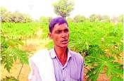 1500 किसानों ने अपनाई जैविक खेती