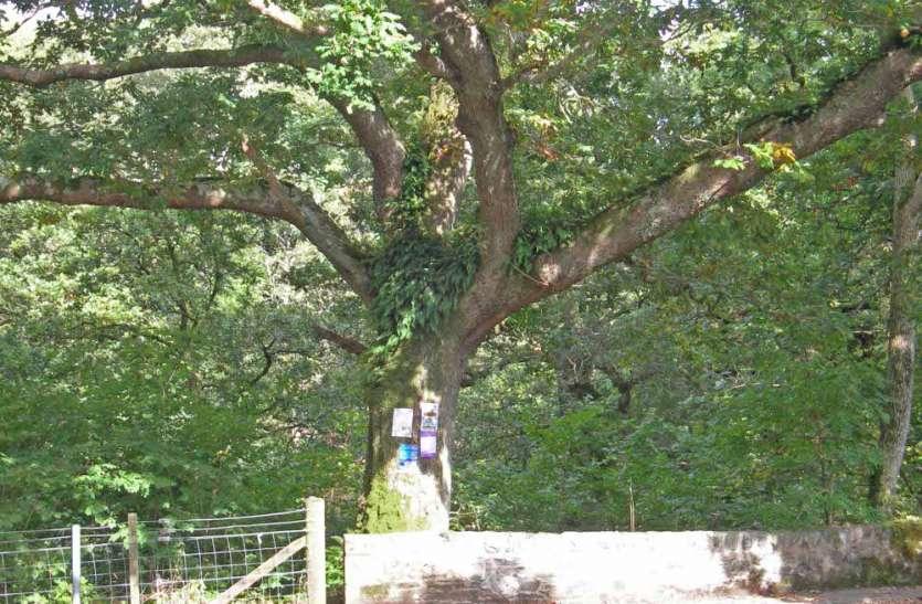 जमींदोज हुए कंडम क्वार्टर, अब पेड़ों पर खतरा