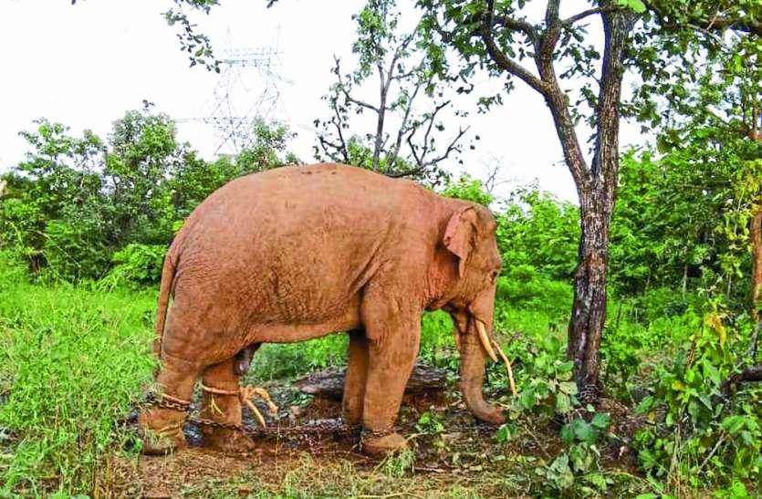हिंसक हाथियों ने सीधी जिला में फिर बरपाया कहर, चार मकान किए धराशायी