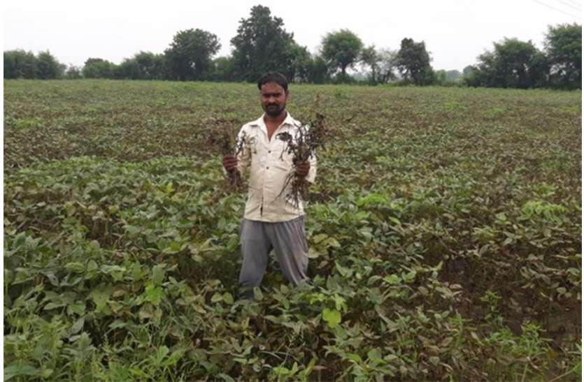 दोपहर में थोड़ी धूप खिलने के बाद शाम को फिर हुई बारिश, किसानों के चेहरे पर चिंता