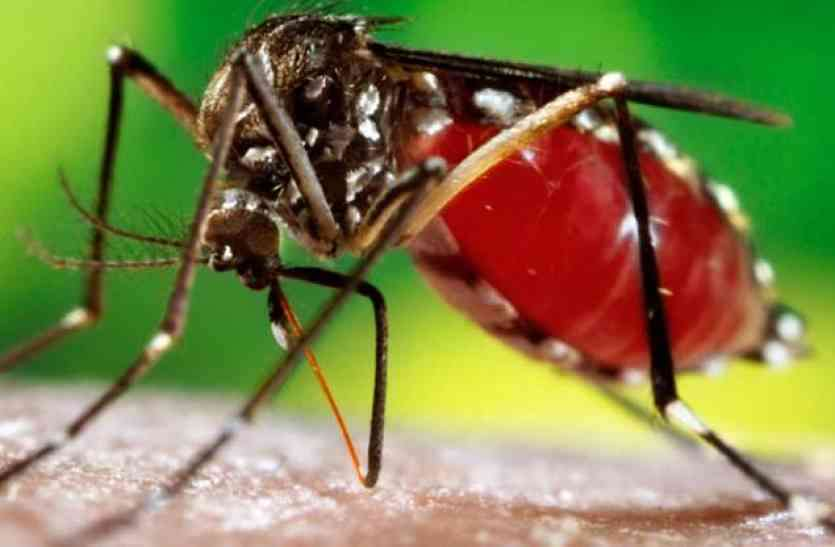शहर में मिले डेंगू के 3 मरीज, ऐसे बचें इस बीमारी से