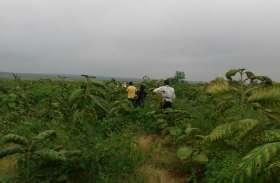 पन्ना में 238  हेक्टेयर में तैयार किया जा रहा नया जंगल, ड्रोन से हो रही मॉनिटरिंग
