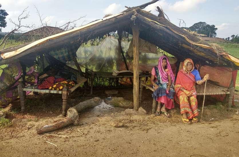 हाथियों ने इन 10 परिवार का ऐसा किया हाल कि पेड़ के नीचे कर रहे गुजारा, सबने थमाया आश्वासन का पिटारा