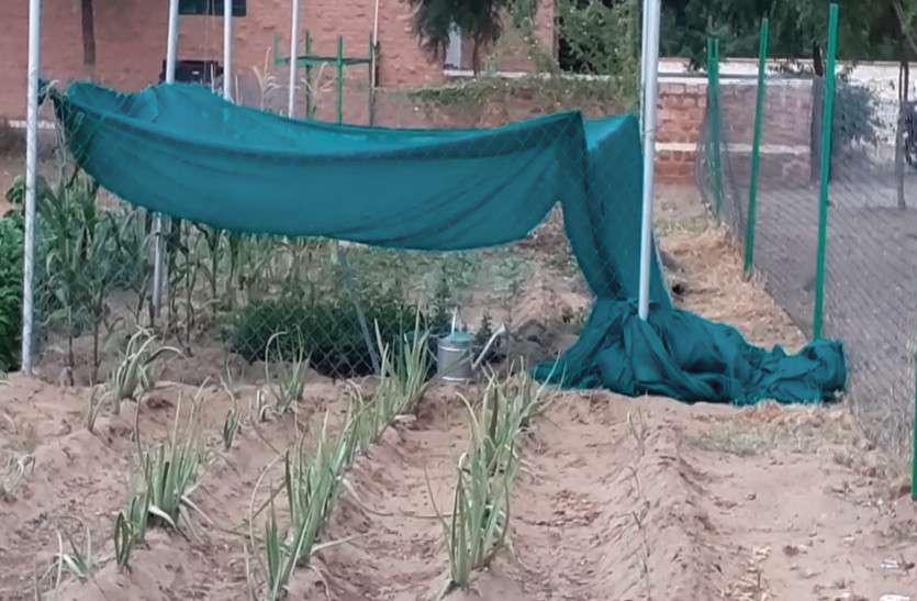 अब किसान बिना बिल के कर सकेंगे फसलों की सिंचाई