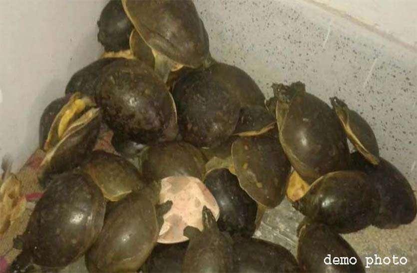 वन विभाग ने नामी किराना दुकान में छापा मारा तो कछुआ खाल, इंद्रजाल जैसे समुद्री पौधे देखकर दंग रह गए
