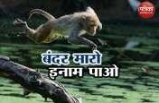 हिमाचल प्रदेशः सरकार ने कहा बंदर मारो इनाम मिलेगा, लोगों ने खड़े किए हाथ