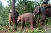रेस्क्यू कैंप से 200 मीटर दूरी पर फिर हाथियों ने मचाया उत्पात, तीन मकानों को किया धराशायी