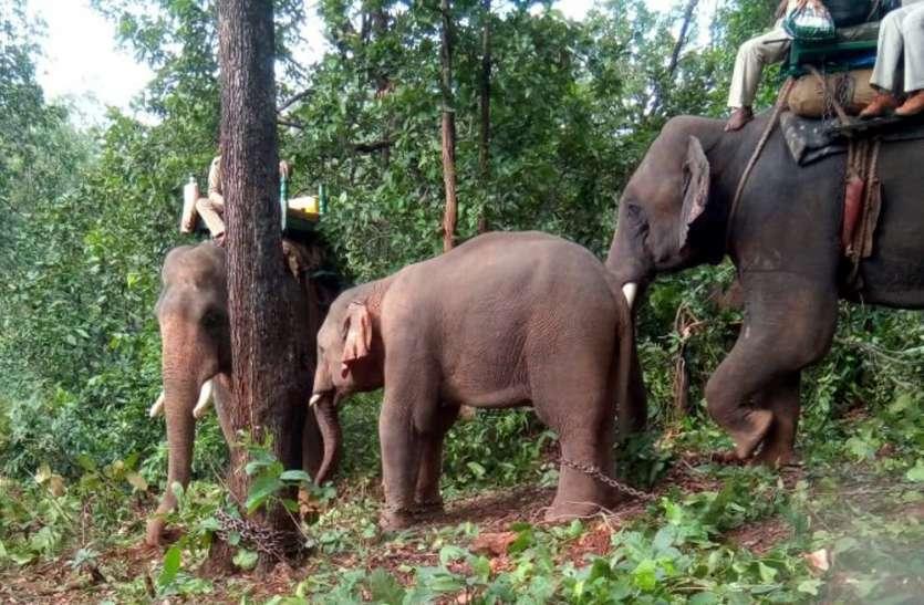 छत्तीसगढ के उत्पाती हाथियों ने मध्यप्रदेश के अफसरों की उडाई नींद