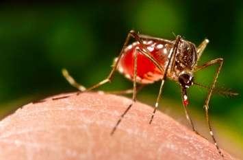 डेंगू से एक मासूम की मौत, संदिग्ध जबलपुर रेफर, मलेरिया महकमा मौन