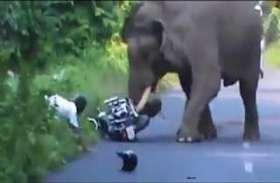 पत्नी को तीज मनाकर मायके से ला रहा था वापस, तभी हाथियों ने शुरू किया दौड़ाना और