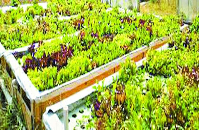 किसानों को कम दाम में मिलेंगे सब्जी के पौधे, यहां शुरू हुआ वेजिटेबल प्रोटोटाइप मिनी सिडलिंग यूनिट