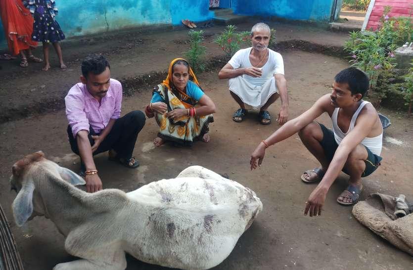 खूंखार जानवर तेन्दुआ की दहशत में जी रहे ग्रामीण