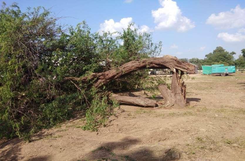 मुख्यमंत्री की सभा से पहले बूंदी में हरे पेड़ो की हुई कुर्बानी... कांग्रेस ने सत्ता पर लगाया मनमनानी का आरोप...