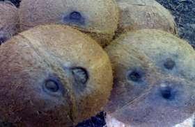 जानिए व्यापारिक स्थल पर क्यों रखा जाता है एकाक्षी नारियल