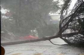 चीन में  'मैंगखुट' तूफान से 4 लोगों की मौत, कई जगहों पर पेड़ गिरे