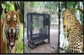 पीलीभीत में टाइगर की दहशत, वनकर्मियों के सभी प्रयास फेल