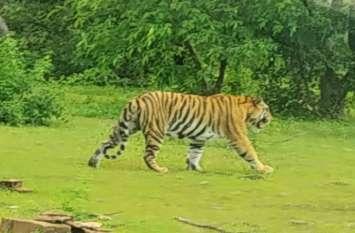 सावधान रहिए, 36 घंटे से गायब है बाघ, कहीं भी हो सकती है मौजूदगी
