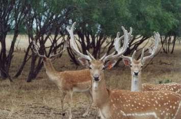 सरकार जिन जीवों को लेकर है गम्भीर, इस जंगल में देखी गईं वे प्रजाति, अब वन विभाग अब ऐसे करेगा हिफाजत