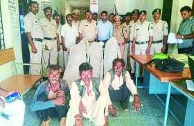 तीन घरों में लहलहा रहे गांजे के 71 पौधे जब्त, पन्ना पुलिस की कार्रवाई से अपराधियों में मचा हड़कंप